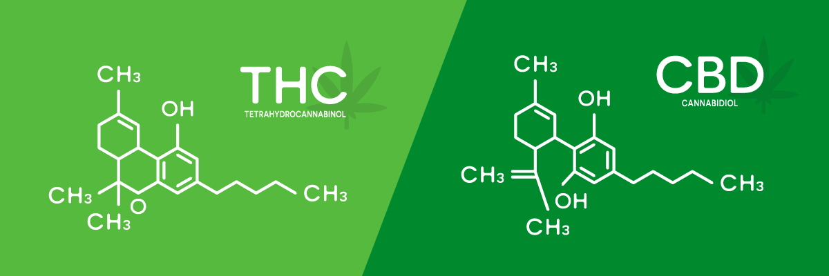CBD VS THC Infographic showing formula of THC on the left and CBD on the right