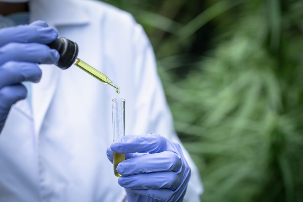 CBD VS CBG The researcher's hands are pouring CBD hemp oil into a glass tube. To be put to trial.Concept of alternative medicine, medicine, experiment, research, medicine. Close up.
